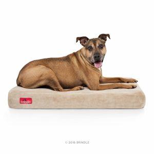9. Brindle 4 inch solid memory foam orthopedic dog bed