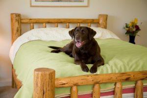 Mambe Dog Blankets