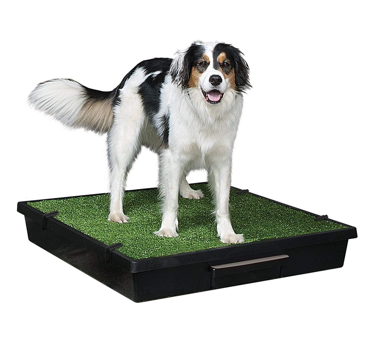 PetSafe Pet Loo Portable Dog Potty