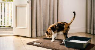 6. BPA Free Premium Cat Litter Mat