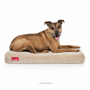9. Brindle 4 inch solid memory foam orthopedic dog bed