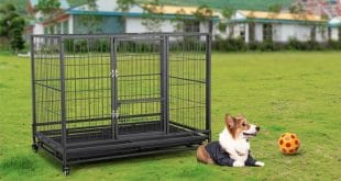 Top 10 Best Dog Crates in 2020 Reviews